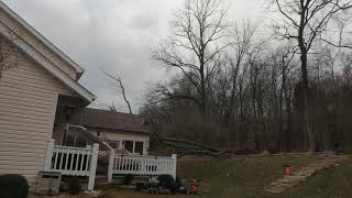 Tree on Wildwood home, wind storm clean up