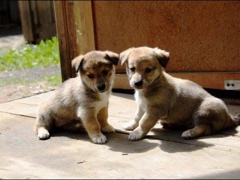 لبنان: مأوى للحيوانات يشهد ارتفاعا كبيرا في أعداد القطط والكلاب بسبب كورونا  - نشر قبل 21 دقيقة