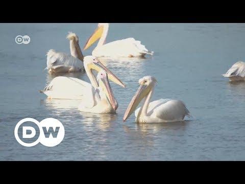 Mauritania: Return of the birds | DW English