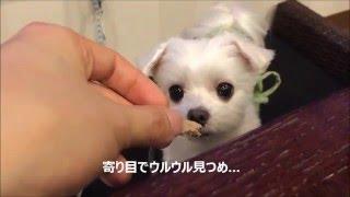 「愛犬お宿」伊豆高原の夕食&バータイム.