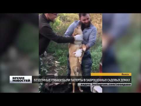 «Концлагерь» для собак обнаружен в Выксе