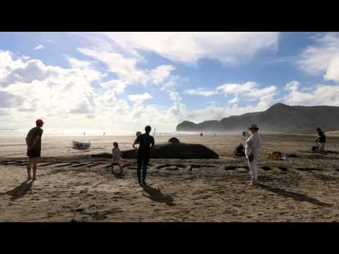 LUSH Cosmetics Live Sand Sculpting for Kiwis Against Seabed Mining.