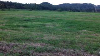Puerto Rico Farmland for Sale