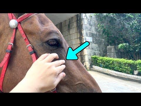 Horse Whispering (Beginner Horse Whisperer)