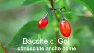 Bacca di Goji, grande fonte di antiossidanti