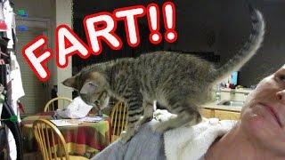 足元から肩まで登頂した子猫、気合いを込めておならを一発