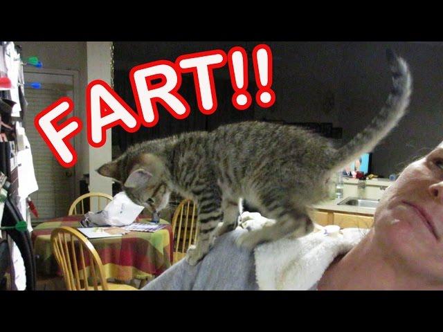 Kitten Farts On Human – Funny!