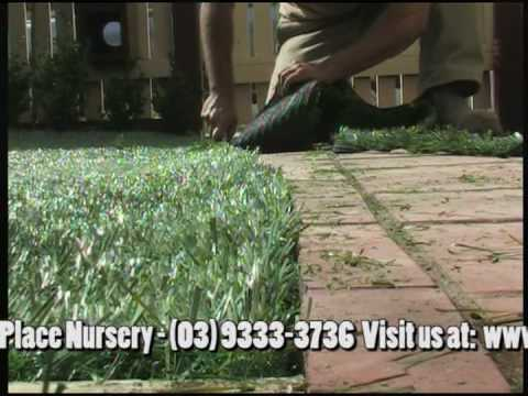 Diy Artificial Turf Fake Gr Lawn Installation Guide