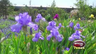 Clark Gardens Botanical Park - Best Public Garden - Texas 2014