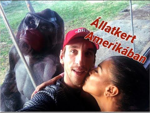 Life in the USA- Amerika 7. legnagyobb Állatkertjében jártunk
