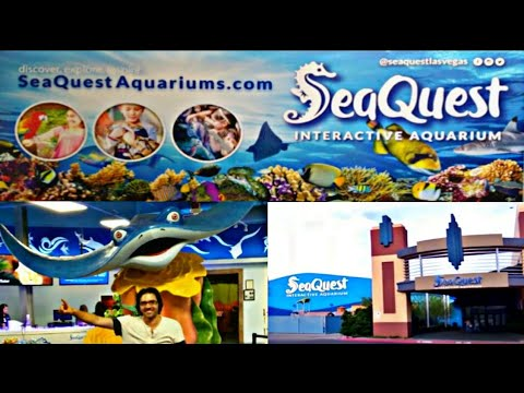 SeaQuest Interactive Aquarium E5, Las Vegas NV, looking at & feeding various sea creatures & birds!