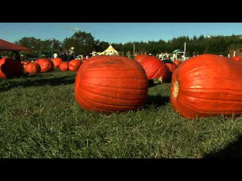 Pumpkin patch pumpkin picking - Pumpkin farm in Long Island