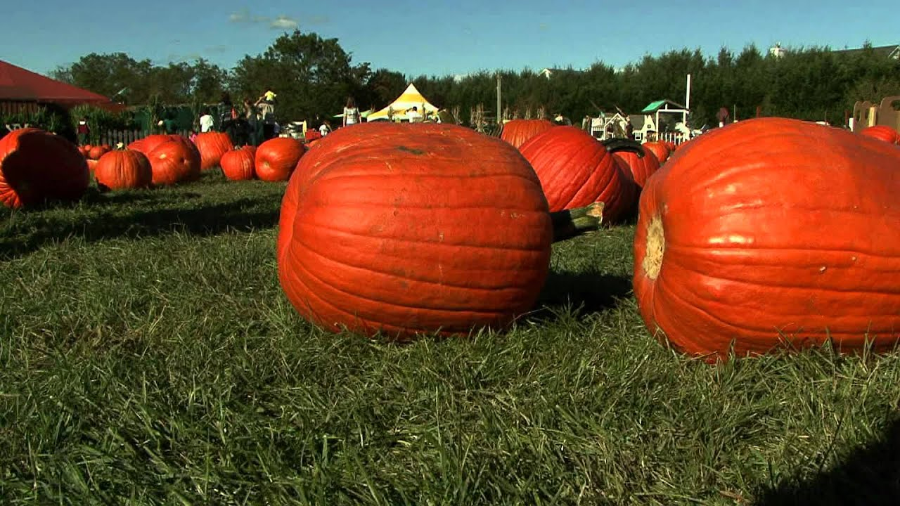 Long Island Pumpkin Picking