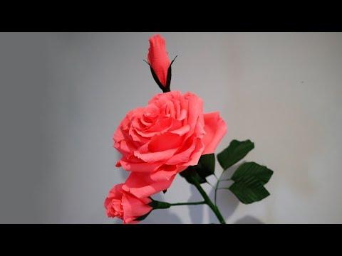 видео: beautiful big rose with buds  (Красивая большая роза с бутонами )