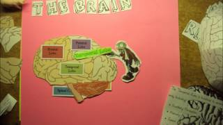 Psychology Stop Motion - Parts of the Brain