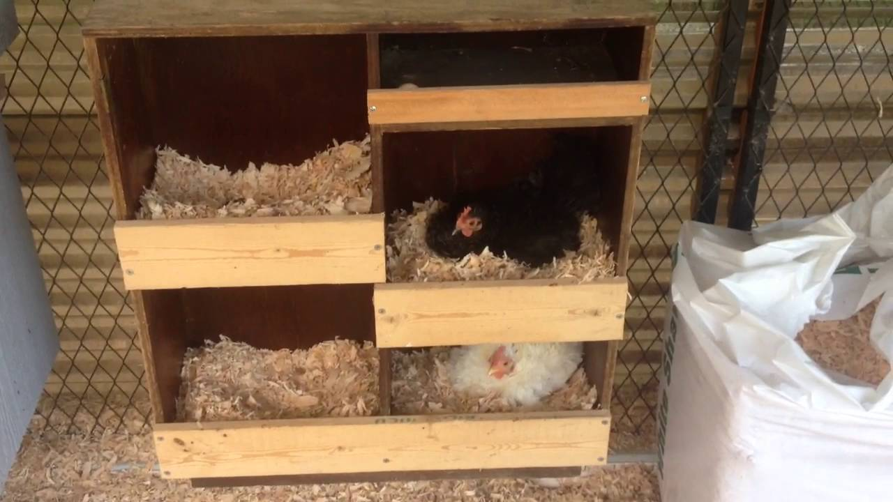 diy bookshelf converted into a multi chicken nest box