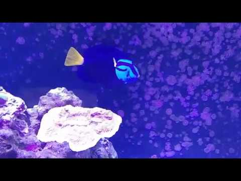Download Reef update,Carbon & HLLE effects on Hippo Tang