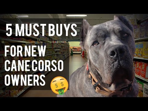 5 Items For New Cane Corso Owners - Living With a Cane Corso