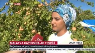 Trt Haber, Tescilli Malatya Kayısısını Dünyaya Tanıttı