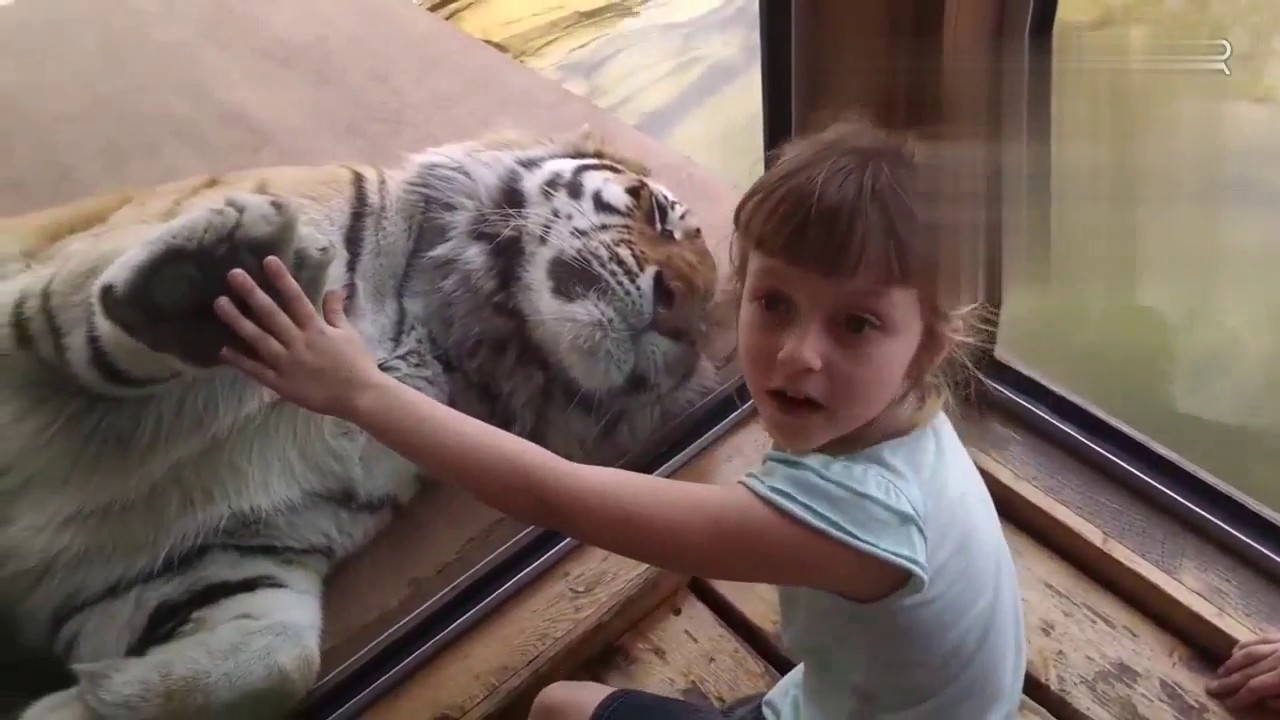 Funny Kids Vs Zoo Animals Are Way Funnier  Try Not To Laugh