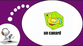 Французского видео урок = Животные № 2