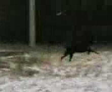 Ettore il cane che chiede scusa conquista il web doovi for Gatto che starnutisce