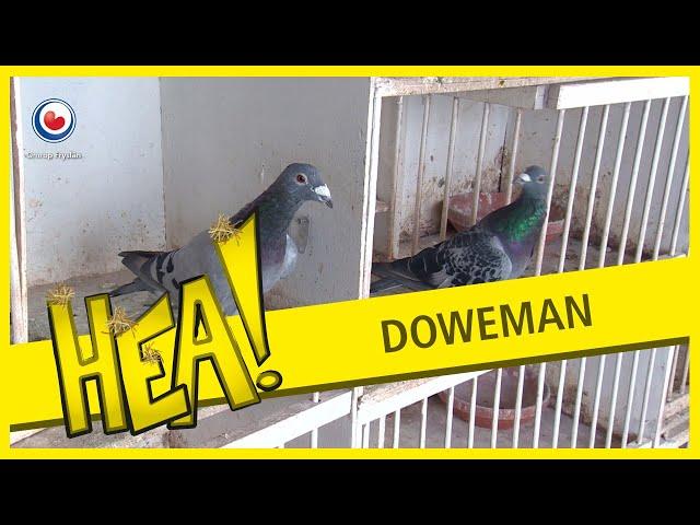 HEA! Zingende duivenman
