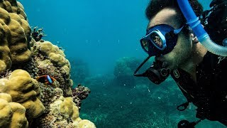 Learning to Scuba DIVE with David Girsh