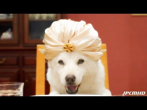 JAPANESE COMMERCIALS | SPECIAL | THE FAMOUS SOFTBANK DOG