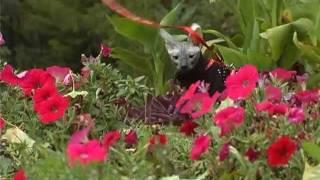 Все О Домашних Животных: Кошка На Шлейке