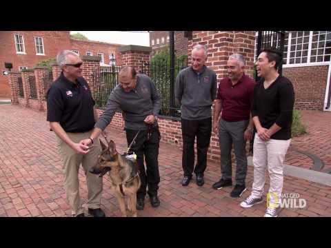 Cesar Millan's Dog Nation: Washington D.C. 'Call Of Duty': Walking to Freedom