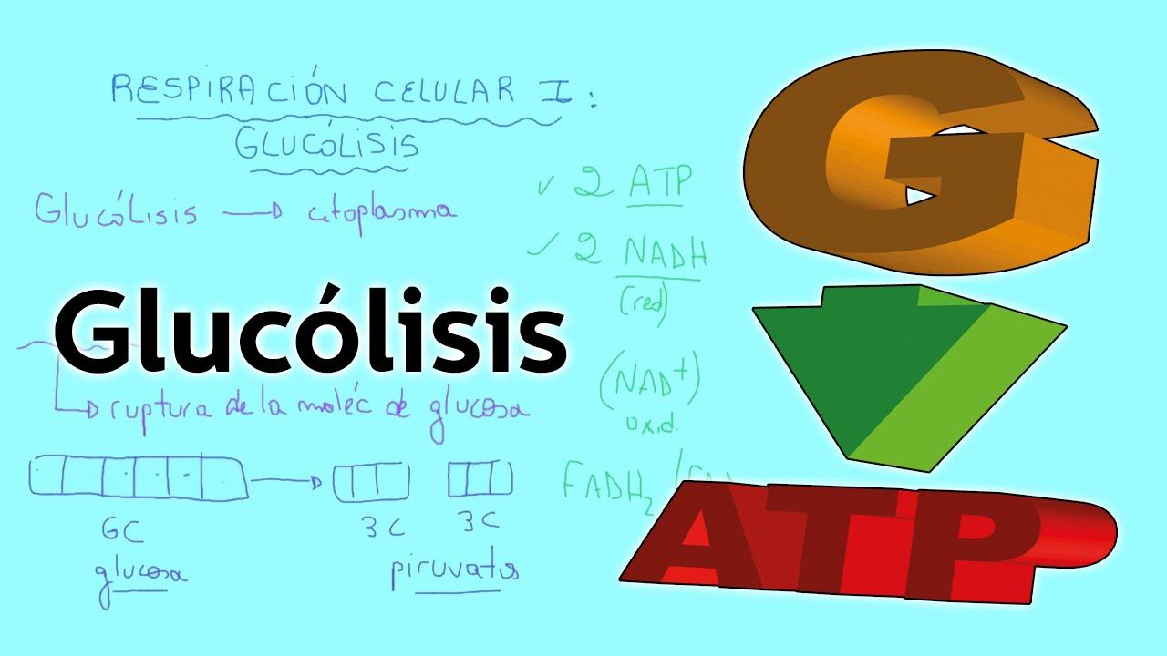Respiración Celular I: Glucólisis