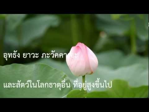 อัปปมัญญาภาวนา - บทสวดและแปลไทย