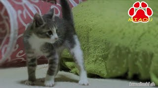 kitten tora and mike. It is the state of the meal from the play 2Ca...