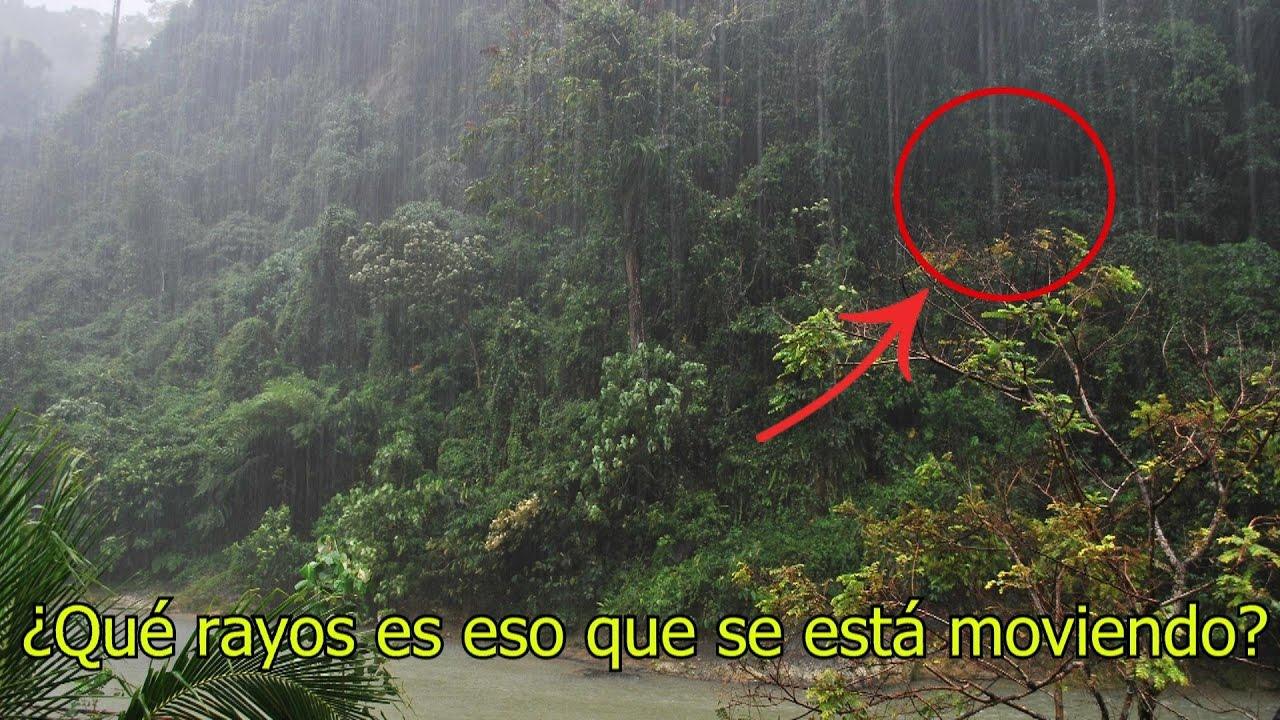 Que es una selva