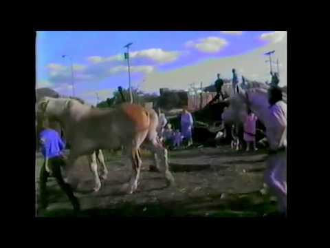 circus parade elephants:horses:camels   west washington ave madison wi 1986