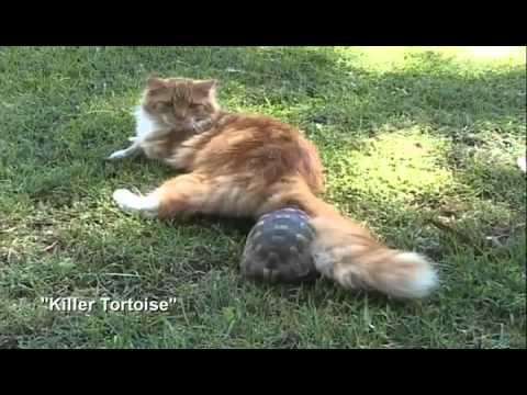 rude tube 200 cats