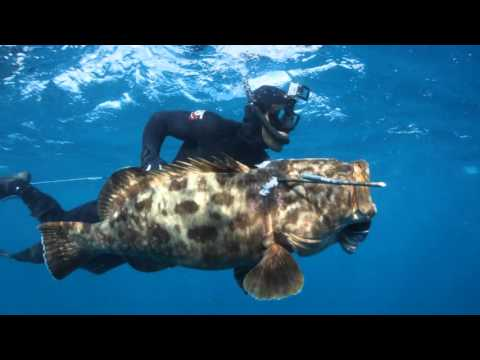 BAJA CALIFORNIA Spearfishing trip