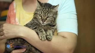 В добрые руки особенный кот Матрос!