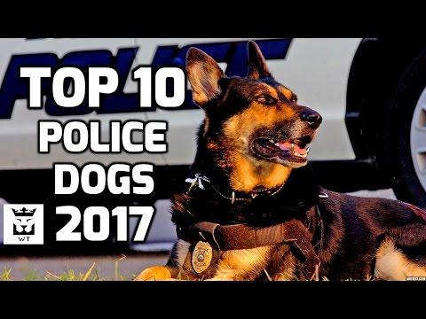 Top 10 Police Dog Breeds 2017(Intelligent Dogs)