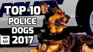 Top 10 Police Dog Breeds 2017(Intelligent Dogs)