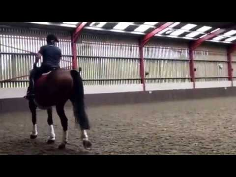 Becky Dean riding None go bye Levi. Day 1 of 3day clinic at amdressage with Adam Kemp
