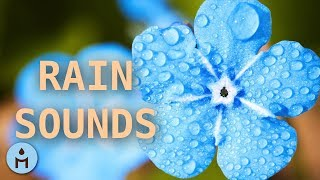 Rain Sounds 10 Hours:The Sound of Rain Meditation,Autogenic Training,Deep Sleep,Relaxing Sounds ❀808