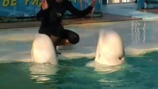 Крым. пгт. Ливадия Театр морских животных