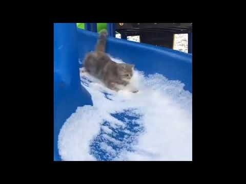 cat having a lot of fun on snowslide
