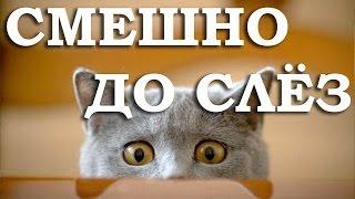 Смешные кошки. Смешное видео про кошек #1