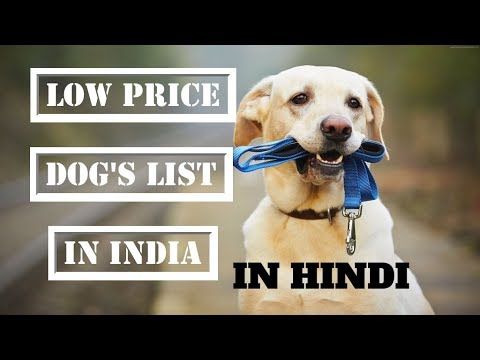 LOW Price Dog's  List in INDIA | PeT info | IN HINDI