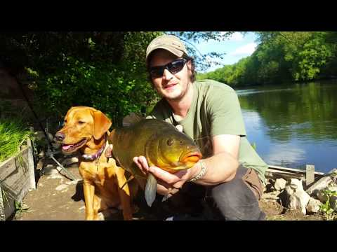 Camping & Fishing In France - Le Cher (river) 2018. With My Dog, Amber!