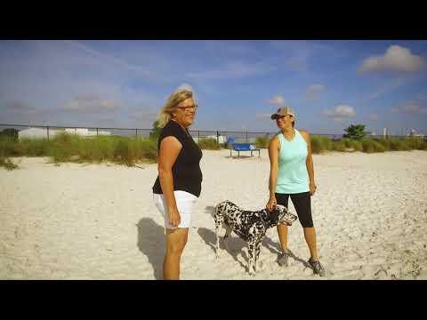 Bark-about: Davis Islands Dog Beach