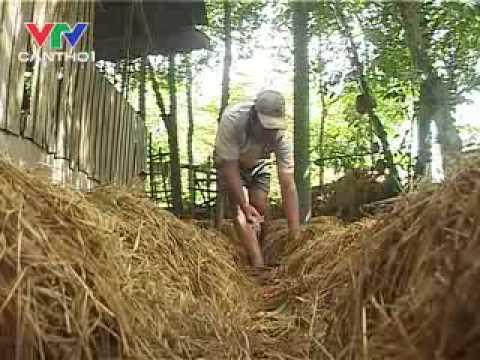 Xử lý rơm rạ trồng nấm và phân hữu cơ